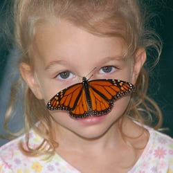 """Butterflies fall into the """"non-scary"""" category for bugs. (photo Northeast Tarrant County Kiwanis)"""