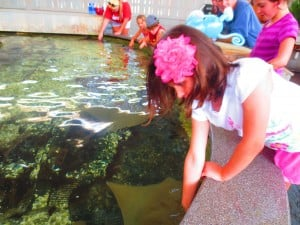 Say hello to a sting ray at the Children's Aquarium. (photo: Therese Powell)
