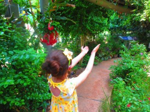 Hold still for the butterflies at Texas Discovery Gardens. Photo: Therese Powell