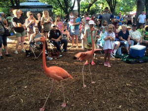 Check out the opening acts for Safari Nights at the Dallas Zoo. Photo: Dallas Zoo