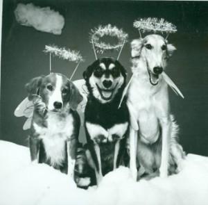 Bark-The-Hairy-Angels-Sing_Clifton-Hall-Kansas-City-MO-e1443714805764 (1)
