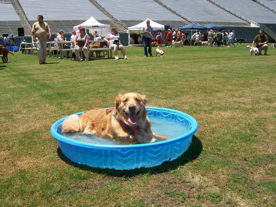 The cotton bowl will be transformed into the world's largest dog park for the Dog Bowl this Sunday. Photo: Dog Bowl