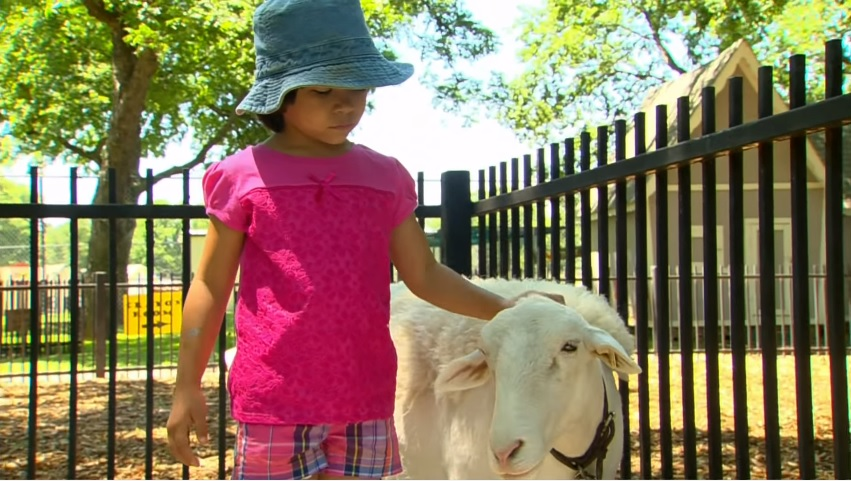 Take your kids to see the kids at Fritz Park Petting Farm. Photo: City of Irving