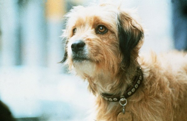 KidFilm has something for everyone--including the classic 'Benji.'